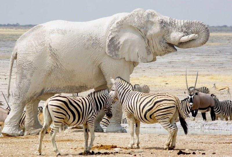 Националният парк Етоша Намибия